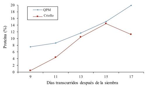 Pourcentage de protéines fourragères dans le Criollo et le maïs à haute teneur en protéines (QPM) dans différents échantillonnages en 2014.