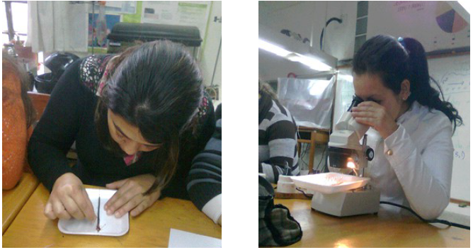 Visor Redalyc - El material natural en la Biología escolar ...
