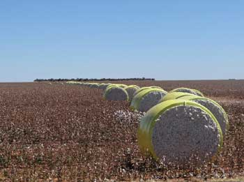 Globalización y reestructuración productiva agropecuaria en el Bioma de Cerrados del Centro- Norte de Brasil (Matopiba)